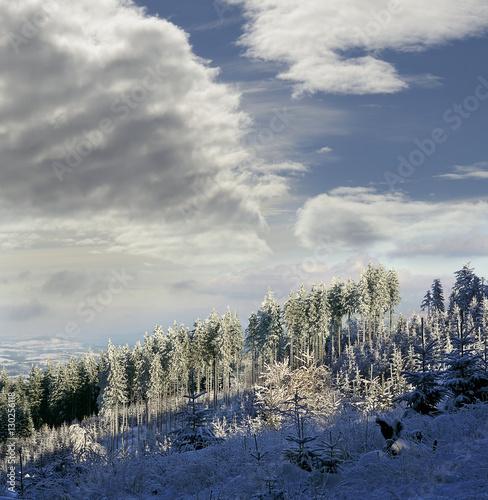 Moravian mountains Beskydy in winter, Frozen tree on winter field, Czech Republi Poster