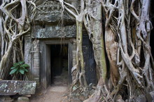 Tree Roots Around Entrance To ...