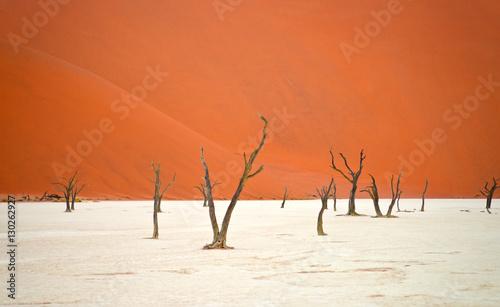 Papiers peints Corail Sossusvlei, Namibia