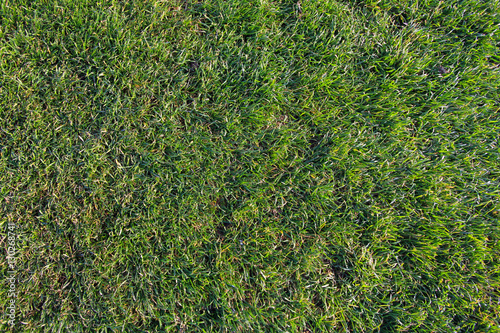 Fotografie, Obraz  Green soccer field background