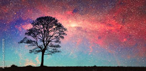 Fotografia  silhouette di un albero e via lattea