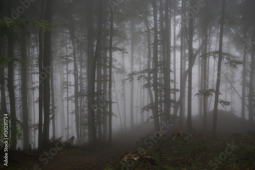 Spoed Foto op Canvas Grijze traf. Misty woods with thick fog and trees silhouettes. Slovakia