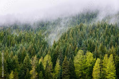 Photo  Mount Hood