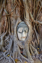 Stone Buddha Head Entwined In The Roots Of A Fig Tree, Wat Mahatat, Ayutthaya Historical Park, Ayutthaya