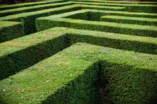 Grass Lawn Cut Into A Maze Lik...