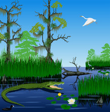 Vector Wetland Pantanal Florid...