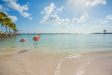 Two Flamingos On The Beach