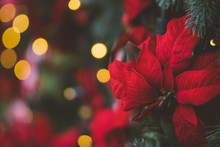 Christmas Decoration With Red Poinsettia Flower