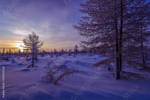Foto op Plexiglas Aubergine Winter scenery