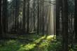 Promienie słońca w jesiennym lesie