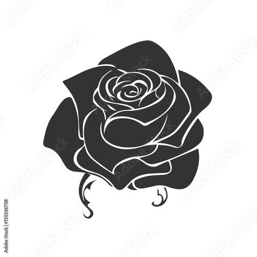 Rose Sketch Flower Design Element Vector Illustration