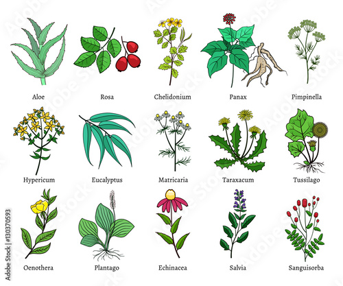 Photo  Hand drawn medical herbs and plants vector illustration on white