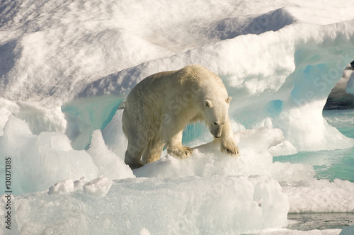 Polar bear on floating ice, Davis Strait, Labrador See, Labrador, Canada, North America