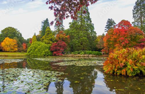 Foto op Canvas Bomen English Countryside
