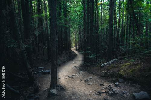 Tuinposter Zwart Winding forest trail.