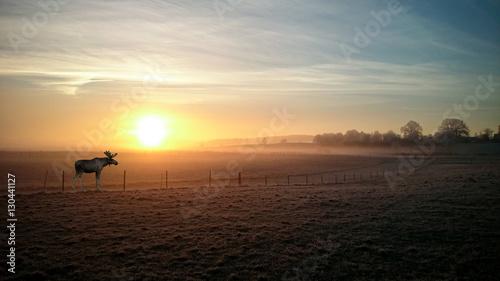 Poster Marron chocolat Elk in sunrise in winter in Munich country