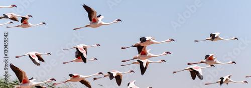 Foto op Aluminium Flamingo Flamingo Flying - Namibia