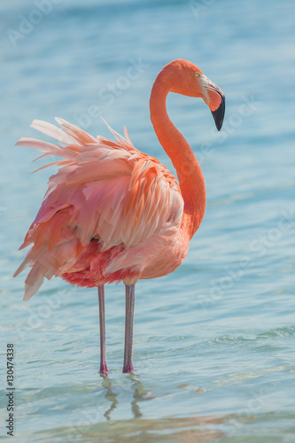 Foto op Aluminium Flamingo One flamingo on the beach