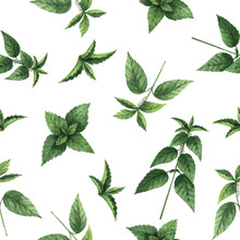 Watercolor Vector Seamless Pattern With Nettle Flowers And Branches.