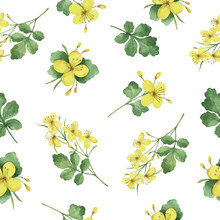 Watercolor Vector Seamless Pattern With Celandine Flowers And Branches.