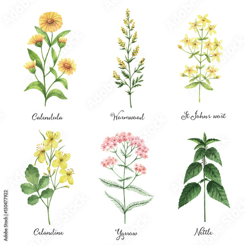 Photo  Watercolor hand painted vector set with medical herbs and plants.