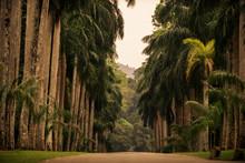Sri Lanka: Alley Of Palms In R...