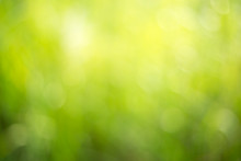 Natural Green Background For Design