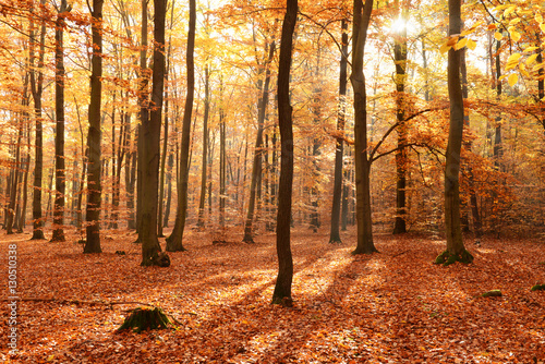 Fotografie, Obraz  Autumn forest