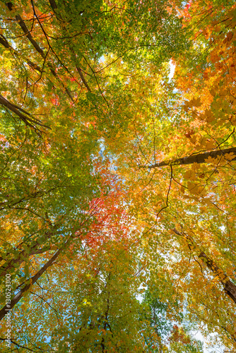 Fotografia  Canopy of Fall Colors