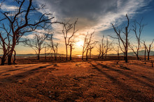 Sunset Over Old Dead Trees And Yellow Sand