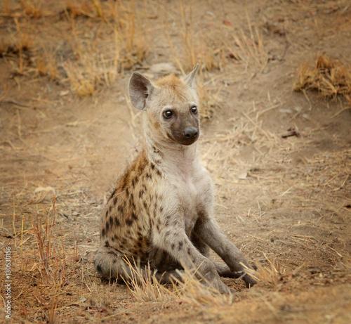 In de dag Hyena Young hyena pup