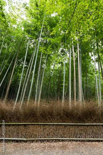 Poster Bamboe Bamboo grove in Japan