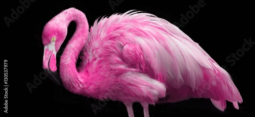 Tuinposter Flamingo bright pink flamingo
