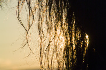 Horse mane silhouette by setting sun backlight
