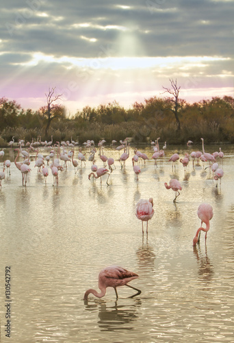 flamingos at dusk