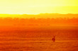 canvas print picture - Antelope in a golden light in national park Liwonde