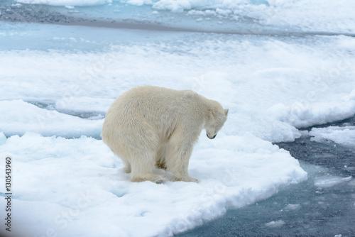 Foto op Plexiglas Arctica Polar bear