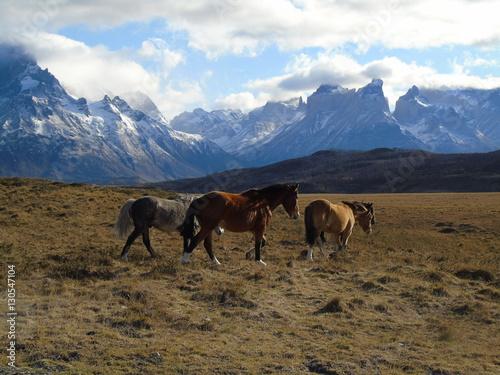 Photo sur Toile Elephant Horses