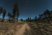 Dirt Road Amidst Trees Growing On Field Against Starry Sky
