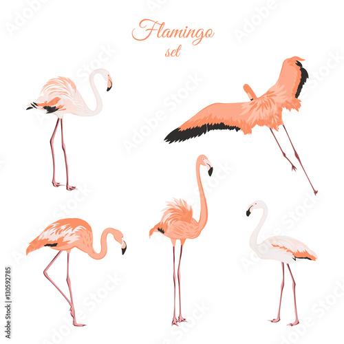 Garden Poster Flamingo Set of isolated pink flamingos on white background. Exotic leggy birds in different postures. Detailed outline drawing. Flock of wading birds wildlife habitat. Vector design illustration.