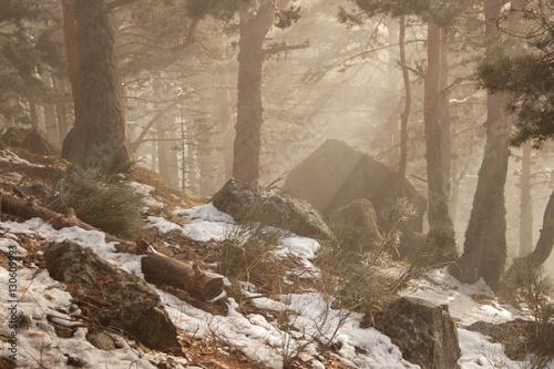 Fotografia, Obraz  Bosque de pinos 5