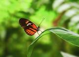 Fototapeta Zwierzęta - motyl