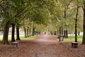 Path of park with benches in autumn
