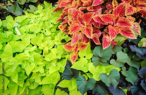 Cadres-photo bureau Vert chaux Columbus Topiary Garden