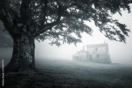 Fototapeta tajemniczy dom w mglisty las