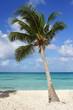 Karibischer Strand, Dominikanische Republik