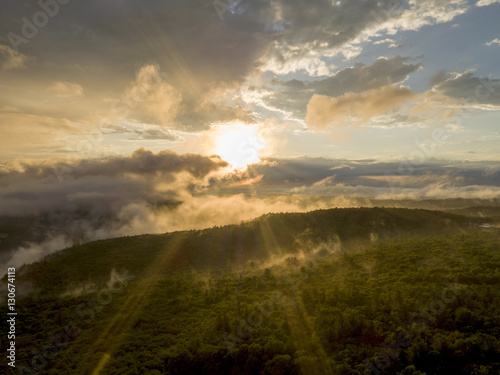 Tree canopy with mist rising above, sun breaking through clouds
