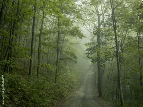 Road through treelined forest - 130674357