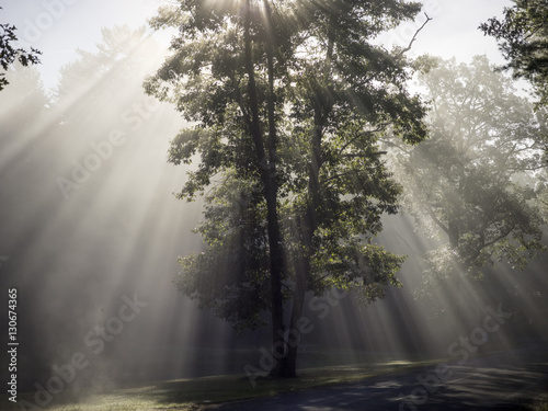 Sunlight shining through tre in forest