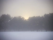 Trees And Snow At Sunrise